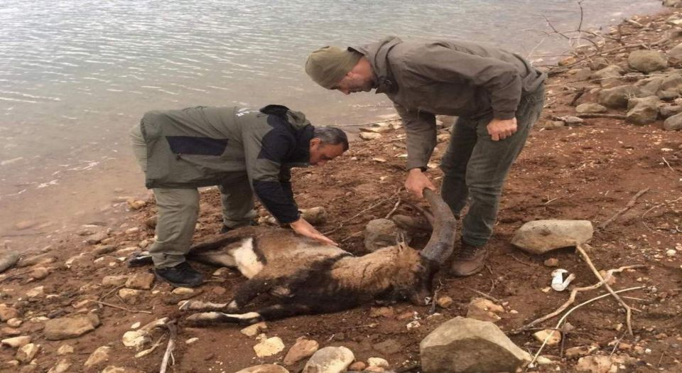 Photo of Dağ keçisi barajda telef oldu