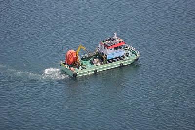 deniz süpürgesi