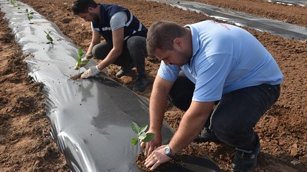 Photo of Aronya meyvesini İzmit Belediyesi toprakla buluşturdu