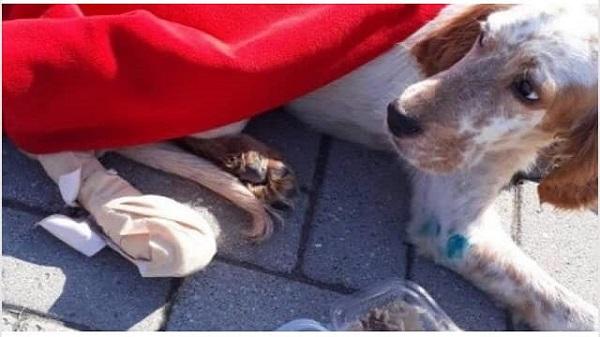 Photo of Bu insanlık suçunu işleyen canileri mutlaka yakalayın