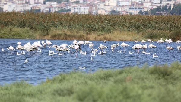 Göçmen kuşlar İzmit Körfezinde mola verdi