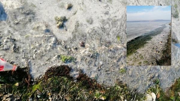 Karamürsel sahilinde korkutan görüntü