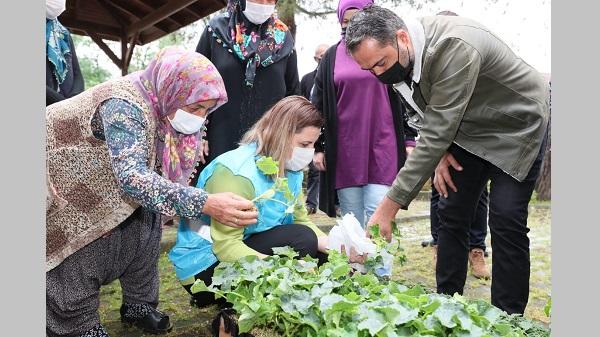 İzmit'in köylerinde ücretsiz fide dağıtımı gerçekleşti