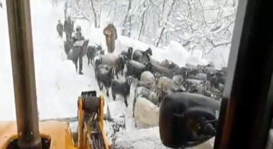Photo of Karda mahsur kalan çobanlar ve küçükbaşlar kurtarıldı
