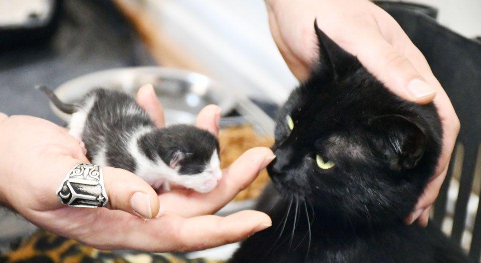 Photo of Bursa İznik'te gebe kedi yavrusuyla hayata döndü
