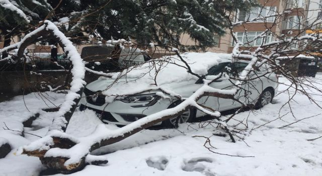 Photo of Bursa'da kar yükünü kaldıramayan ağaç otomobilin üstüne devrildi (ÖZEL HABER)